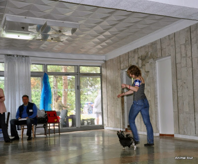 Фотоотчёт с 2хCACIB в Песчанном, Крым 07-08.09.13 2_Bess