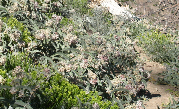 bee filled plants encroaching on trail