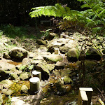 Stepping stones over the upper Lane Cove River (394727)