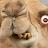 USMCColtsFan avatar image