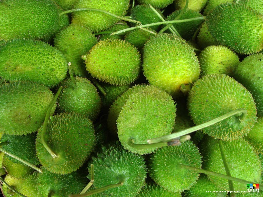 fruits and vegetables of bangladesh Bangladesh food safety authority claims that there is no scope to adulterate vegetable and fruits by mixing formalin, a health hazardous chemical.