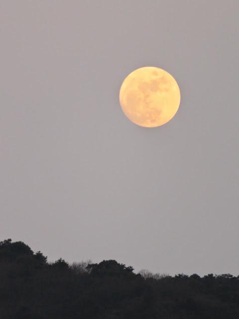 曽根干潟からの月-3