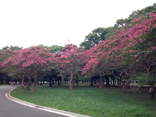 代々木公園で撮影
