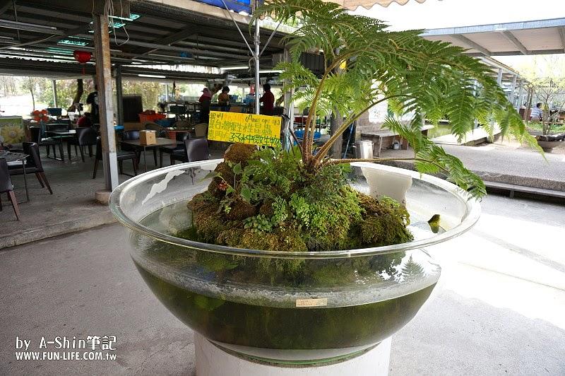 勝洋休閒農場(勝洋水草文化館)|宜蘭員山玩這裡,勝洋水草文化館超有趣,知識加玩樂的結合~