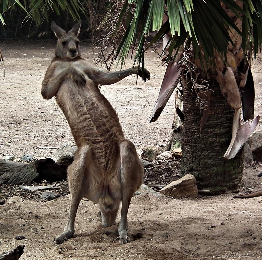 australian adventures natural  cultural information and photos   3  13  11  20  11