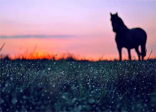 Dawn in 50 Howling Examples of Dew Photography