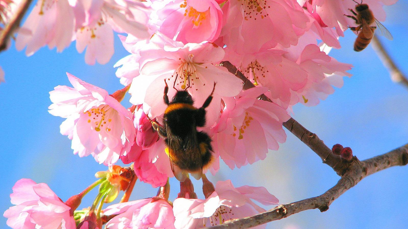 lente achtergronden hd - photo #13
