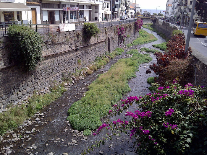 a colorful stream of the Funchal city with flowers