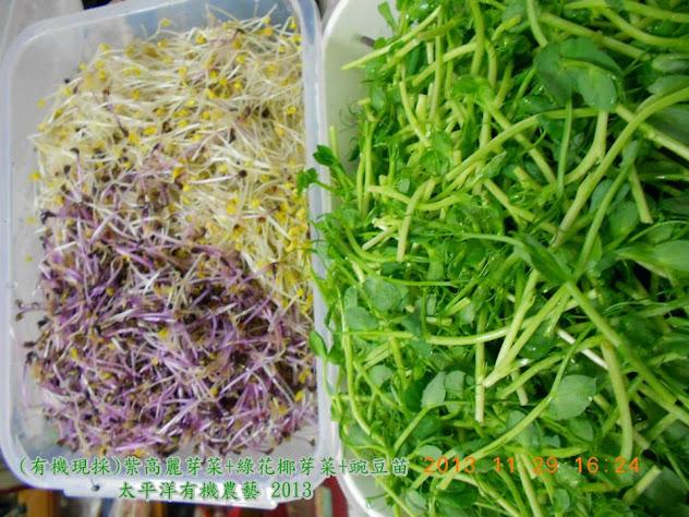 有機紫高麗菜芽菜苗 有機青花椰芽菜苗 有機豌豆芽菜苗