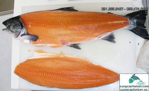 cá hồi phi lê