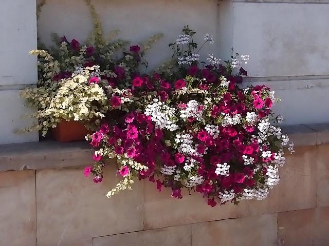 Forum Ogrodnicze Oaza Topic Kompozycje Na Balkon 110