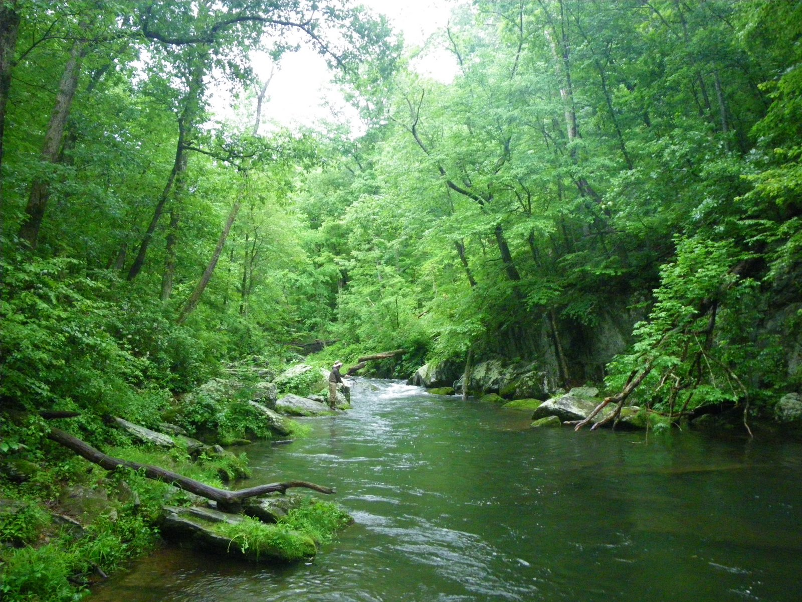 This river is wild local for Oak orchard fishing report