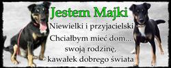 majki2.png