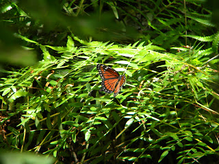 Butterfly at Sawgrass Lake Park