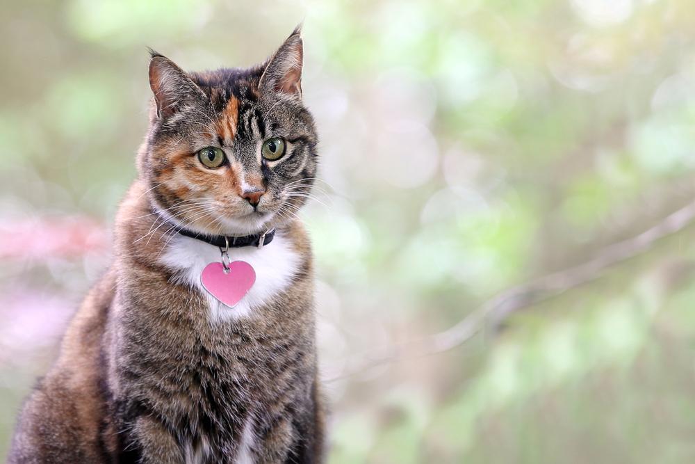 portrait-beautiful-tabby-cat.jpg