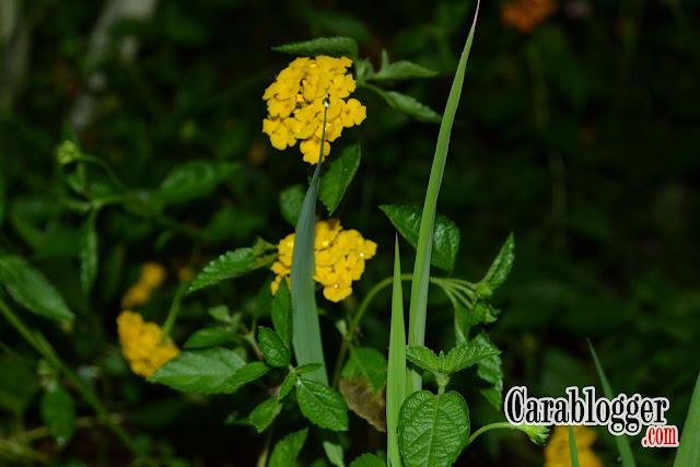 wallpaper tanamat bunga