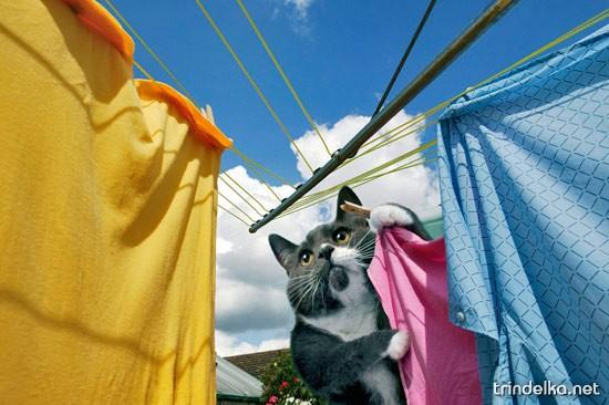 Кот на хозяйстве...