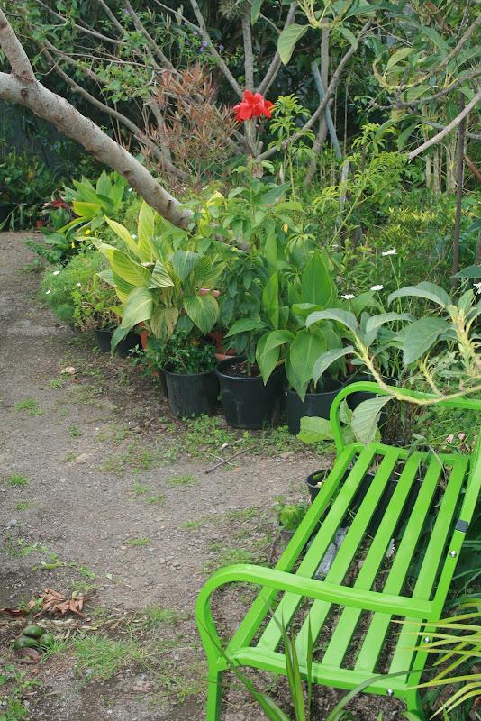 Futur jardin d'orchidées!!! IMG_3544