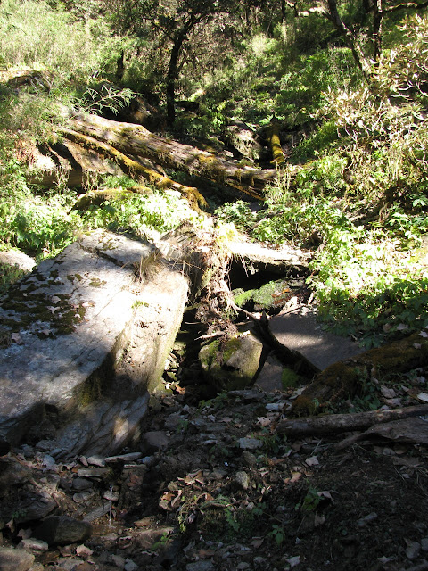 log filled dry creekbed