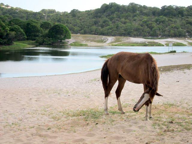 Lagoon in Bahia Brazil