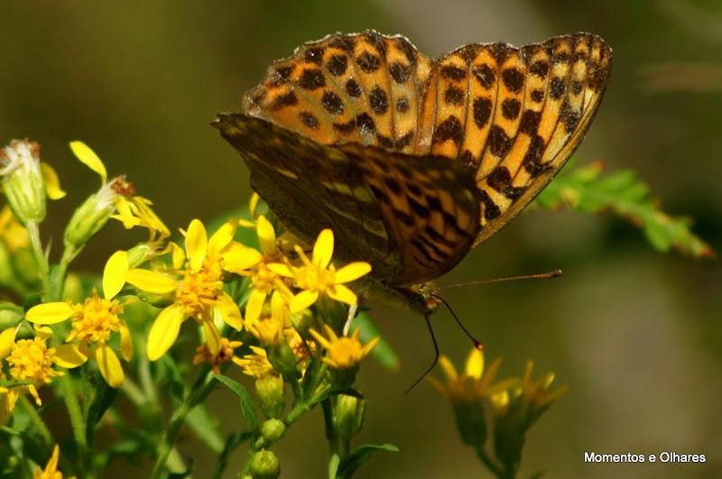 O passeio das borboleta