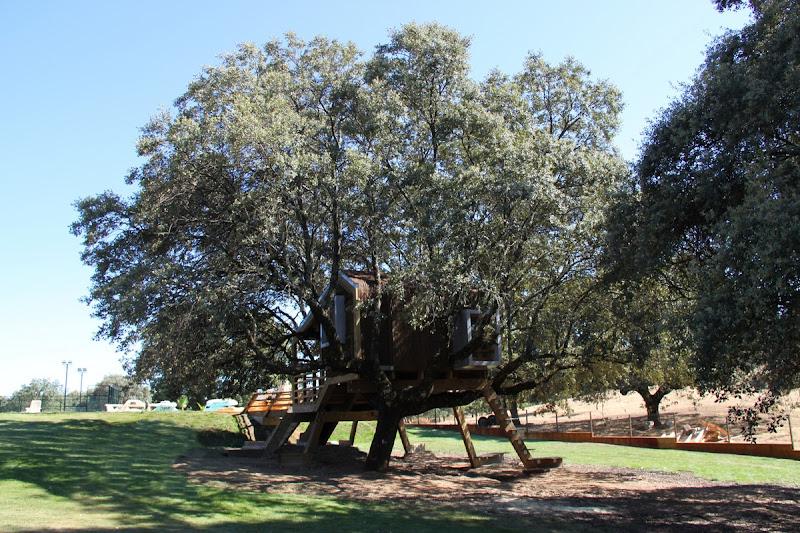 La casaen el árbol enraizada.