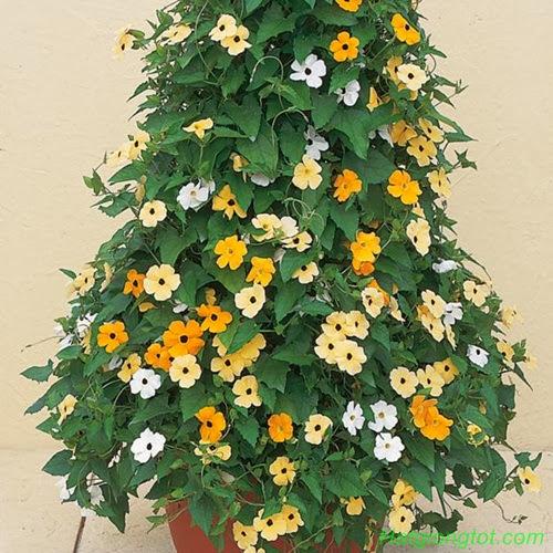 Hạt hoa ánh dương