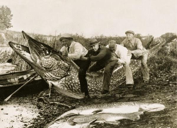 História de pescador do início do século XX