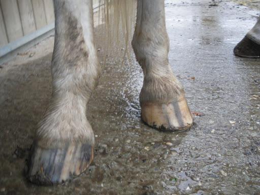 Suivis des pieds nus, c'est ici !  - Page 4 IMGP2768