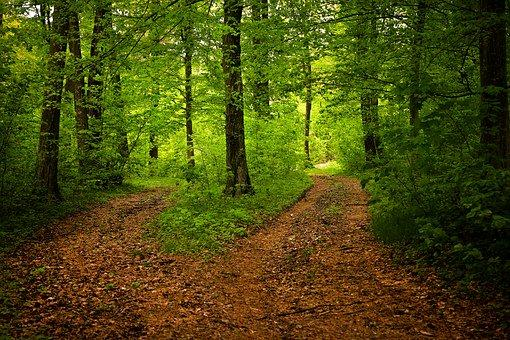 Path, Forest, Nature, Season, Green