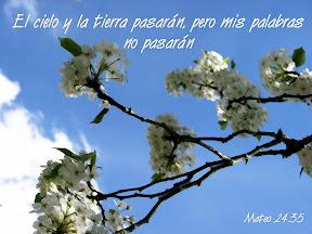 El cielo y la tierra pasarán, pero mis palabras no pasarán - Mateo 24.35