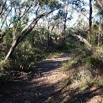 Along the Willunga track (156436)
