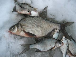 Рыбалка на волге около самары и