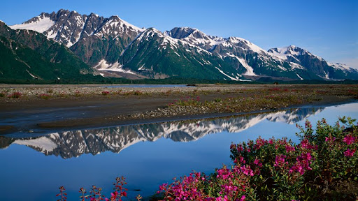 Fireweed, Saint Elias Mountains, Glacier Bay National Park and Preserve, Alaska.jpg