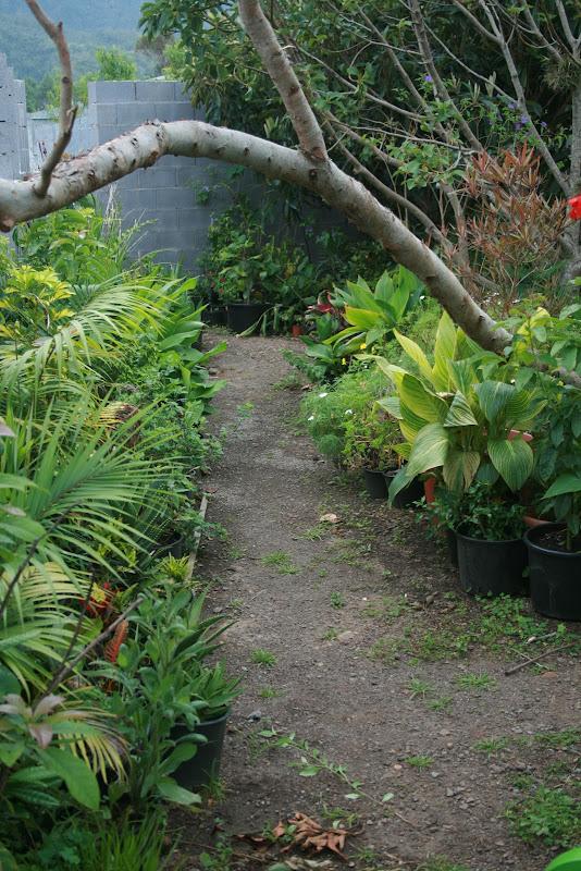 Futur jardin d'orchidées!!! IMG_3529