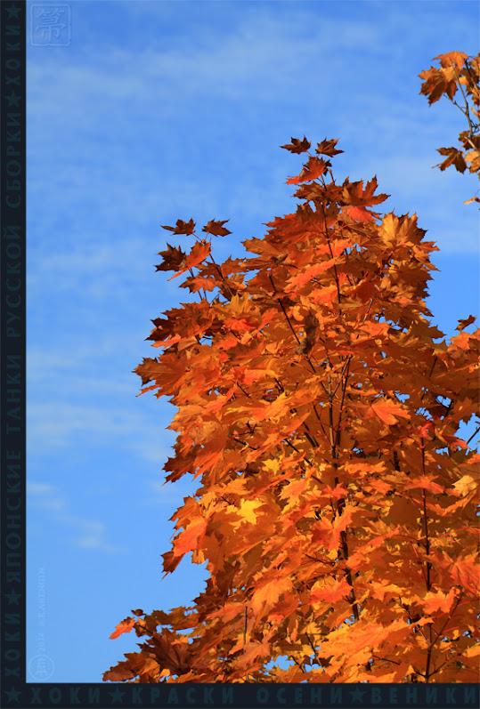 хоки, hoki, осень, autumn colors, краски осени, клен, acer,