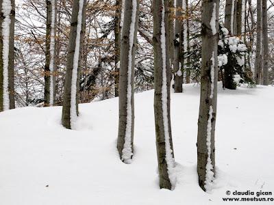 padurea iarna
