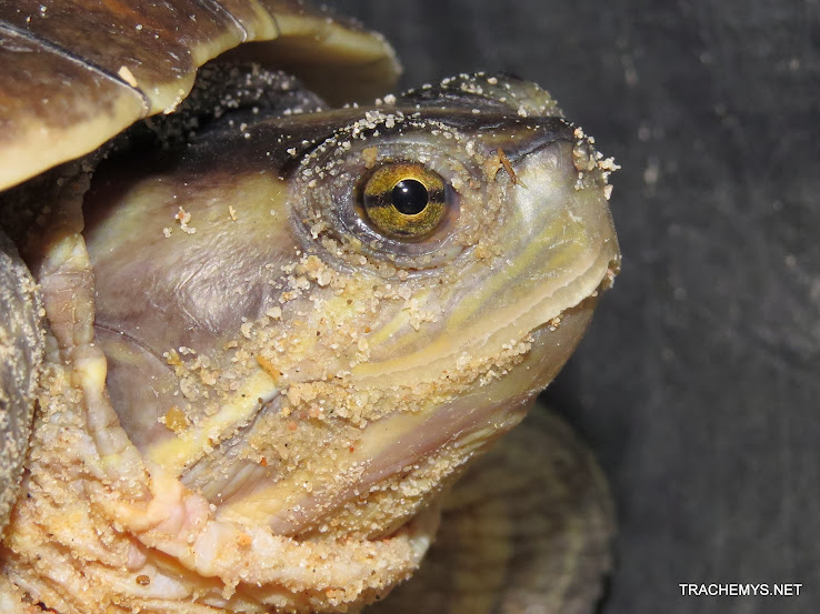 mes tortues (BK) - Page 12 IMG_4497