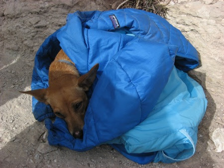 blue jacket as dog sleeping bag