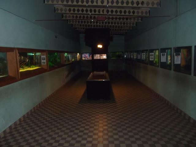 Wnętrze akwarium