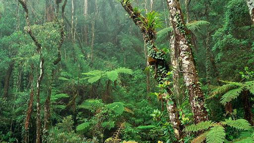 Montane Rainforest, Mount Kinabalu National Park, Borneo.jpg