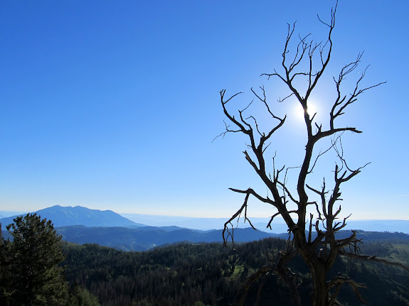 Dead tree on the Nebo ridge