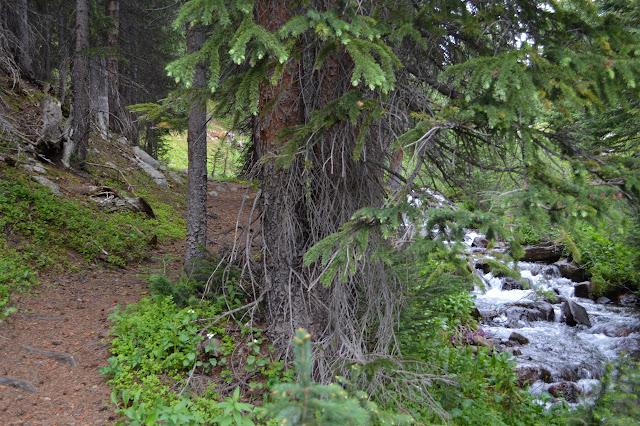 trail separated from Meadow Creek by a line of trees