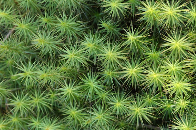 green spiky moss