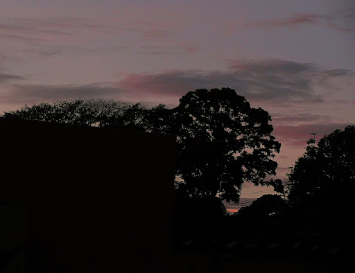 Dawn sky and trees in El Hatillo Caracas Venezuela