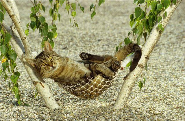 гамак для кошек