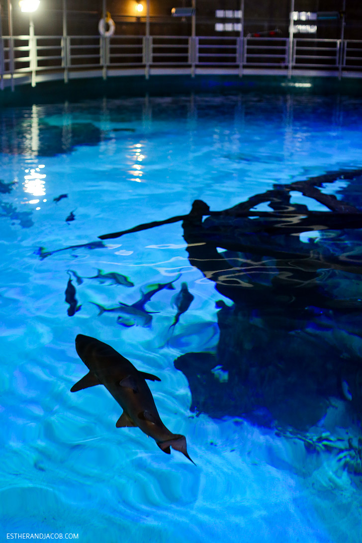 Feeding Sharks at the Mandalay Bay Shark Reef Aquarium.