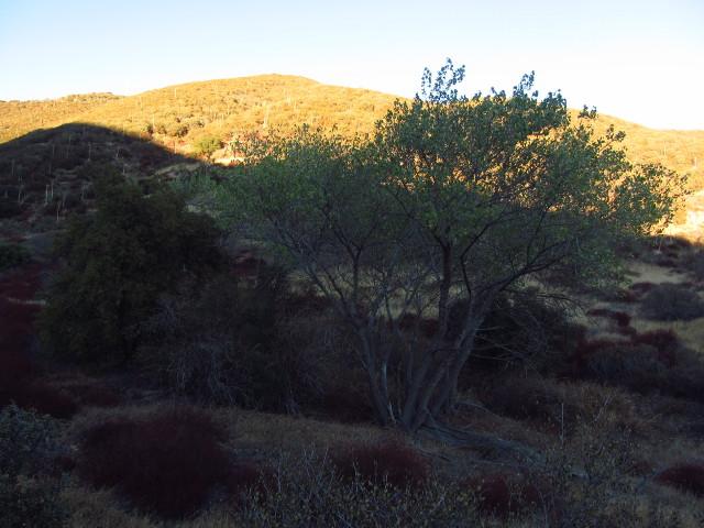 poplar trees in the basin