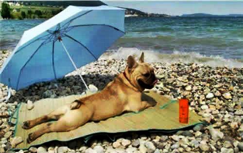 Neste calor até cachorro no rabo sua