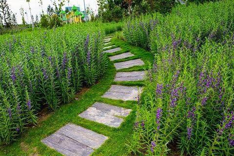 Đảo Kim Cương – Điểm dừng chân lý tưởng Dao-kim-cuong-hang-hoa-violet